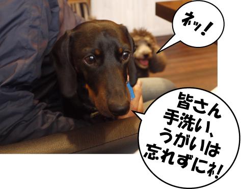 9_20090520132810.jpg