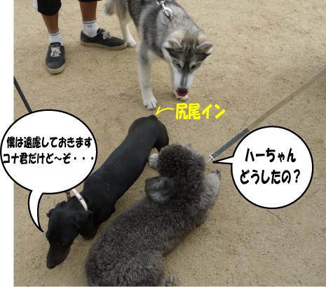 9_20090615213204.jpg
