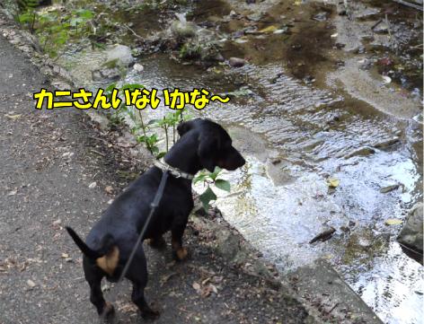 9_20091019235951.jpg