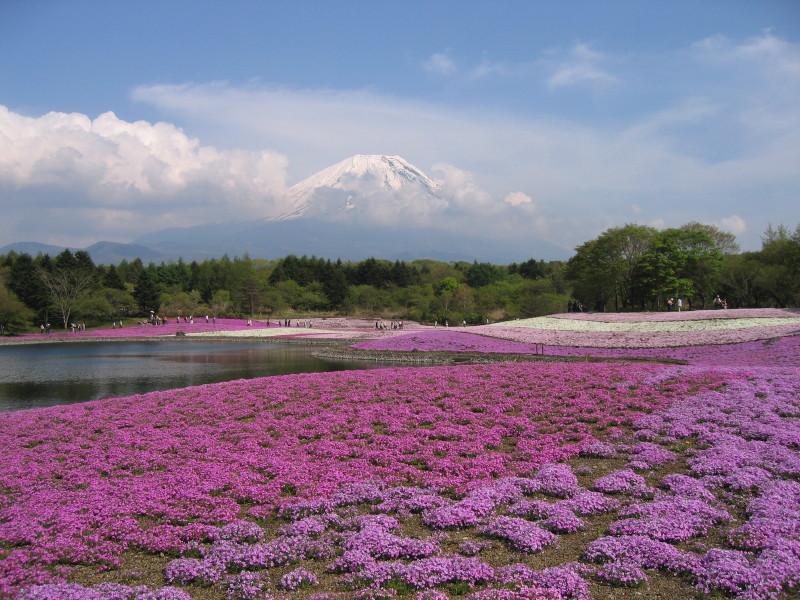 20080518sakura