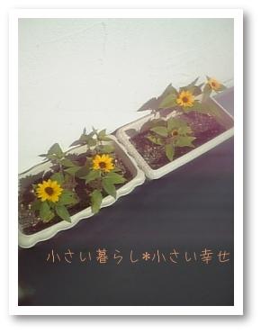 littel-himawari_1.jpg