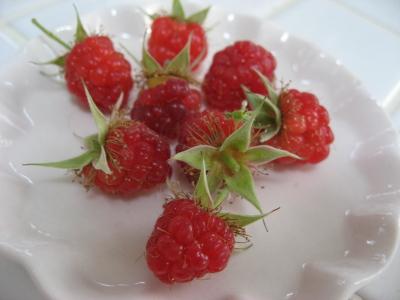 razberry_3.jpg