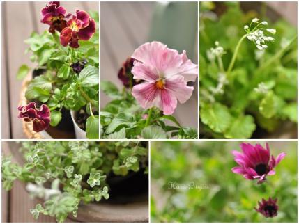 flower_20120125155415.jpg