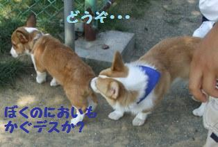 Kai080913-2.jpg