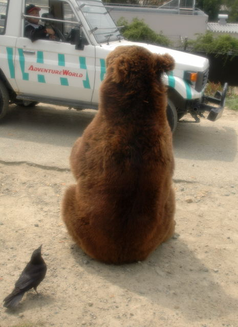 br-bear0001.jpg