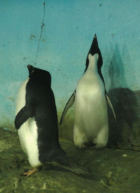 penguin-ad0001.jpg