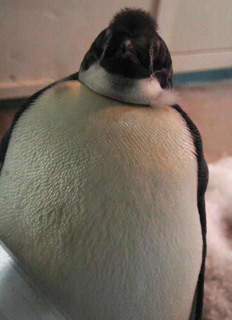 penguin-enp0001.jpg