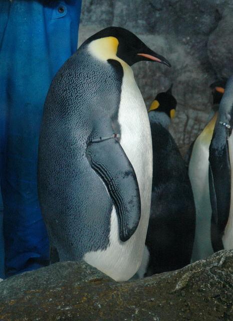 penguin-enp0001_1.jpg