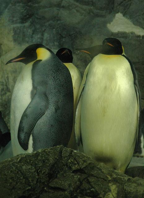 penguin-enp0001_2.jpg