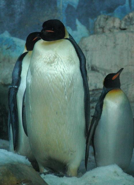 penguin-enp0001_3.jpg