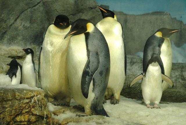 penguin-enp0001_4.jpg