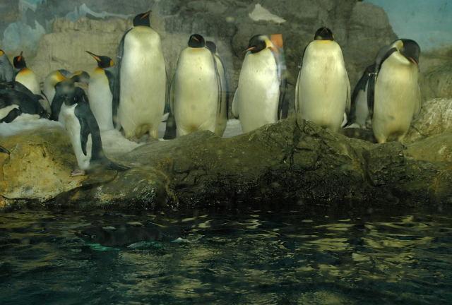 penguin-enp0001_5.jpg