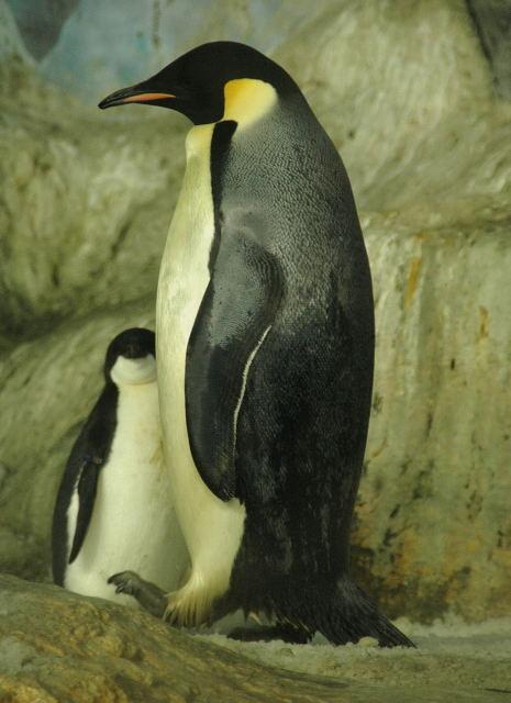 penguin-enp0001_7.jpg