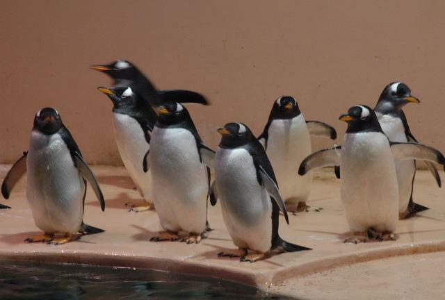penguin-je0001_1.jpg