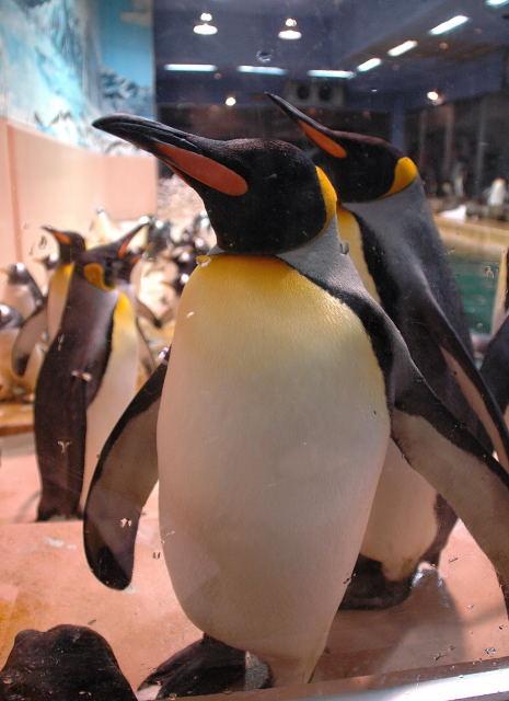 penguin-kin0001.jpg