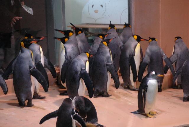 penguin-king0001.jpg