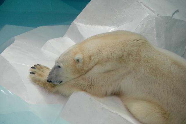 w-bear0001_11.jpg