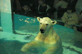 w-bear0001_3.jpg