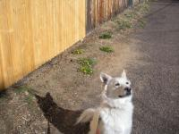 犬とタンポポ