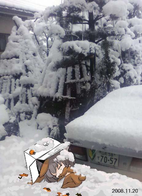 路有冻死兔