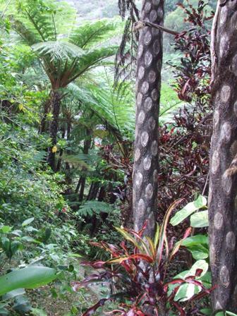 DSCF1255  ジャングル