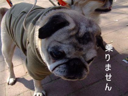 2008_03110144.jpg