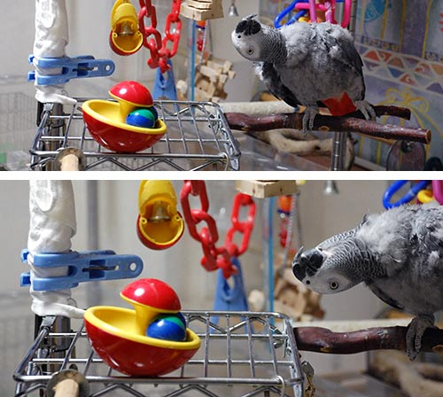 おもちゃを見るJean-Luc