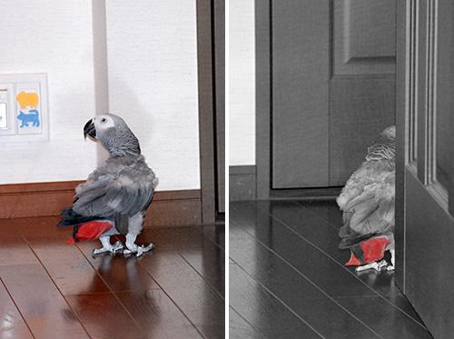 床を歩くJean-Luc