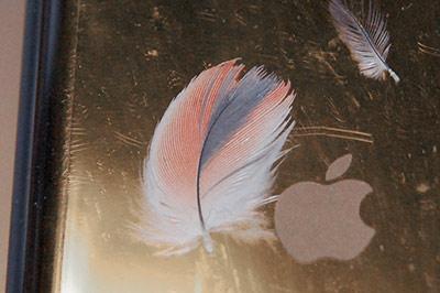 Chloeの赤い羽根
