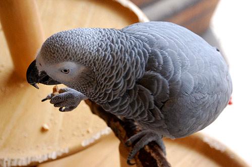 ピーナツを食べるChloe