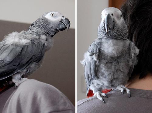 肩の上のJean-Luc