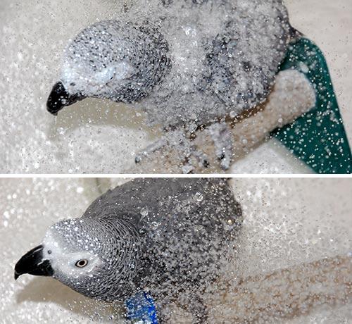 シャワー-2