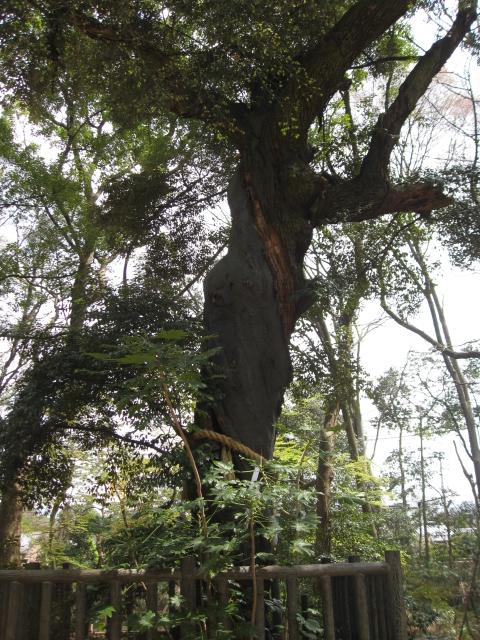 連理の賢木