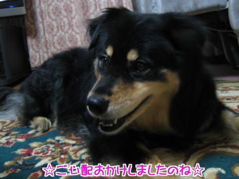 hana_genki.jpg