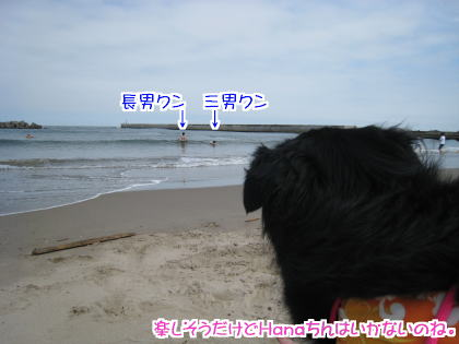 hatutaimen2.jpg
