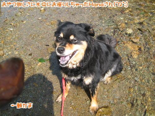 namezu_hana2.jpg