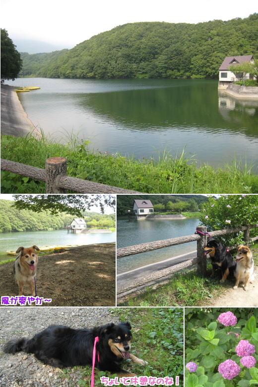 yokokawa5.jpg