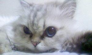 2009_07_06そいねポナ