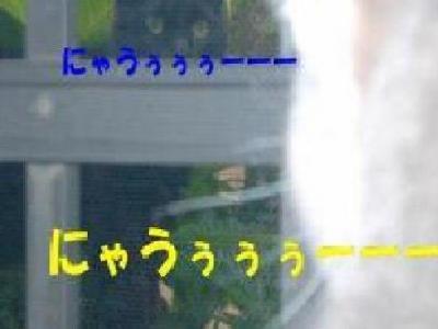 MXZD0894(1).jpg