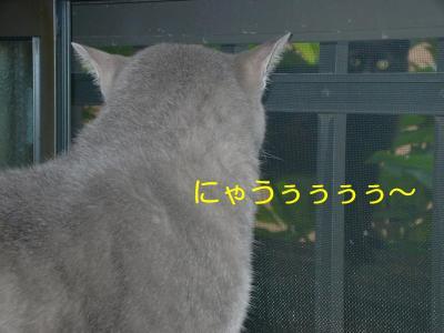 MXZD0895(1).jpg