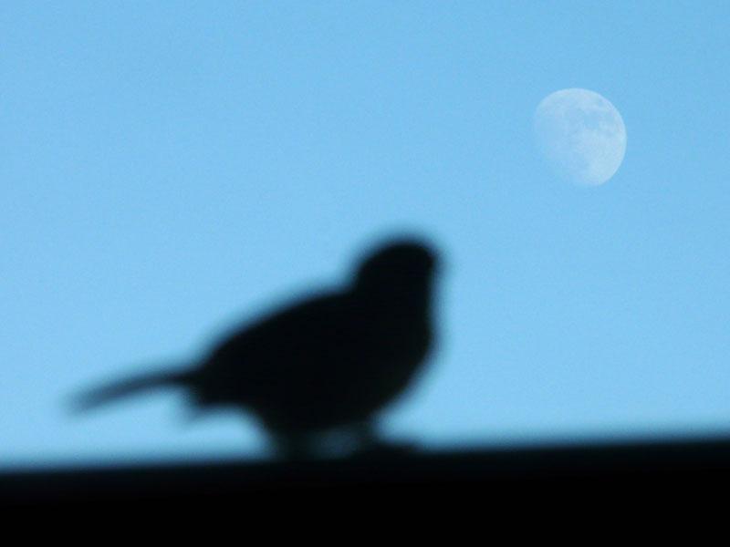 080813月と雀3