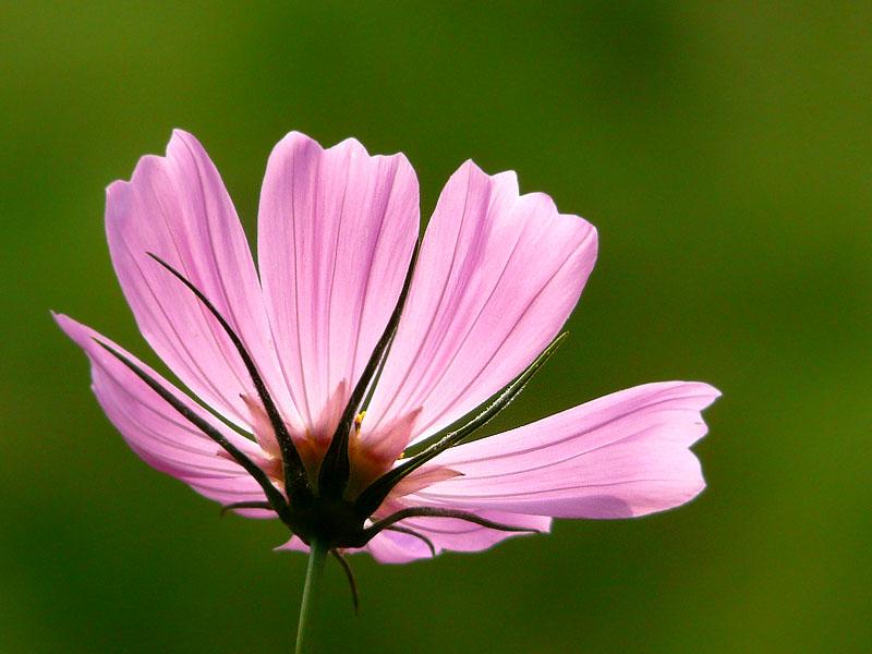 080915花と蝶1