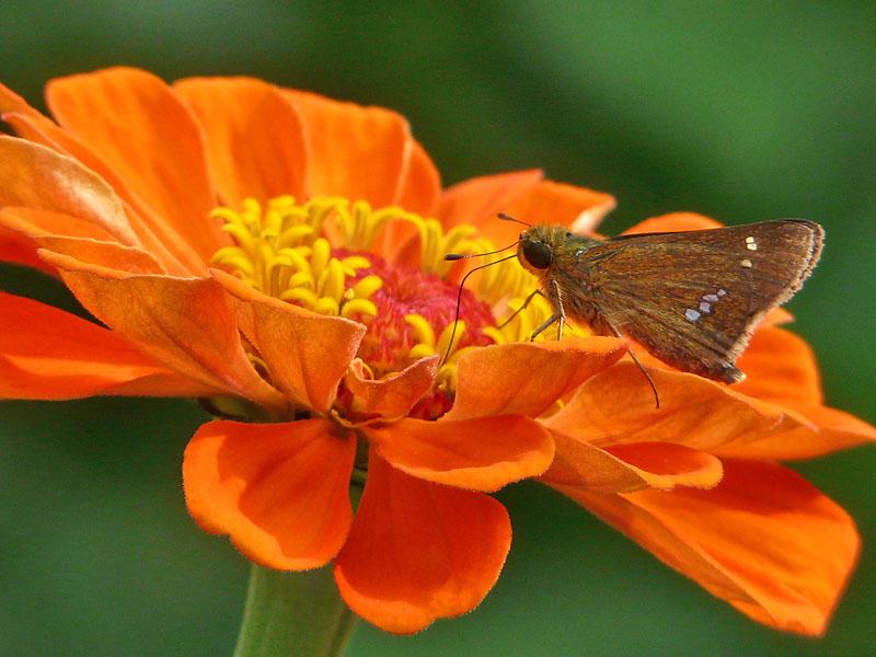 080915花と蝶2
