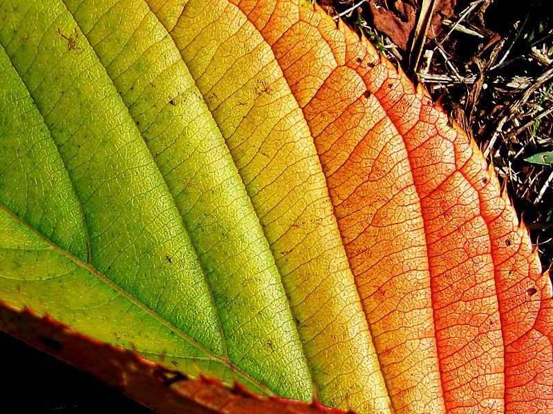 080917夏から秋へのグラデーション1