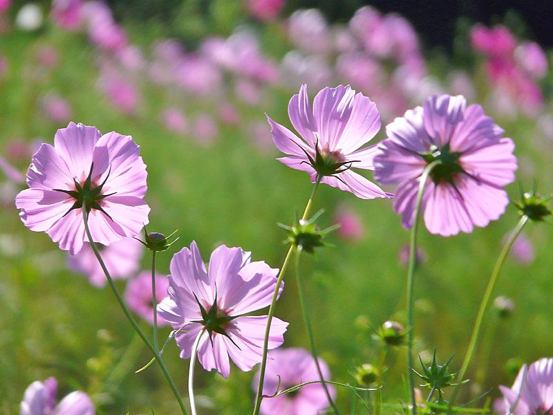 181013花の国1