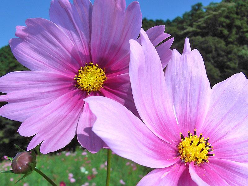 181013花の国2