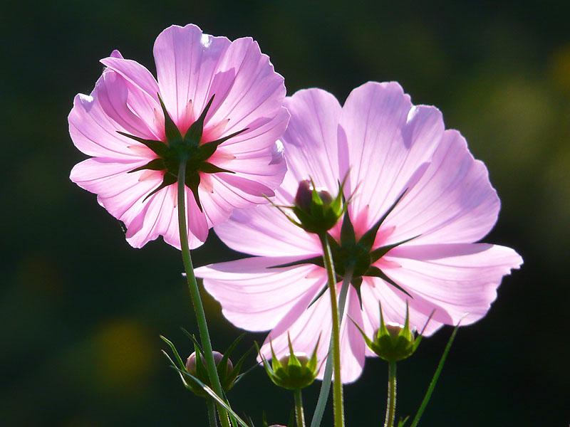 181013花の国3