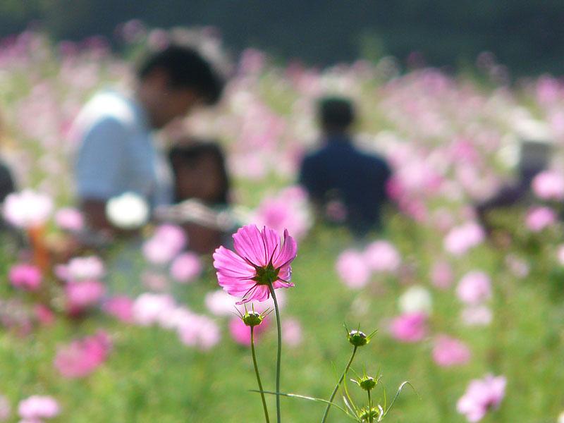 181013花の国5