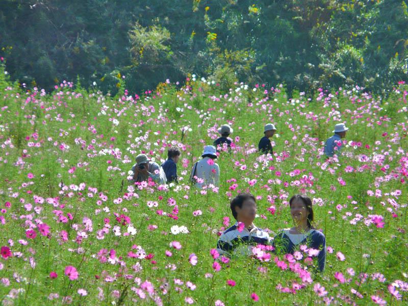 081013花の国2-1