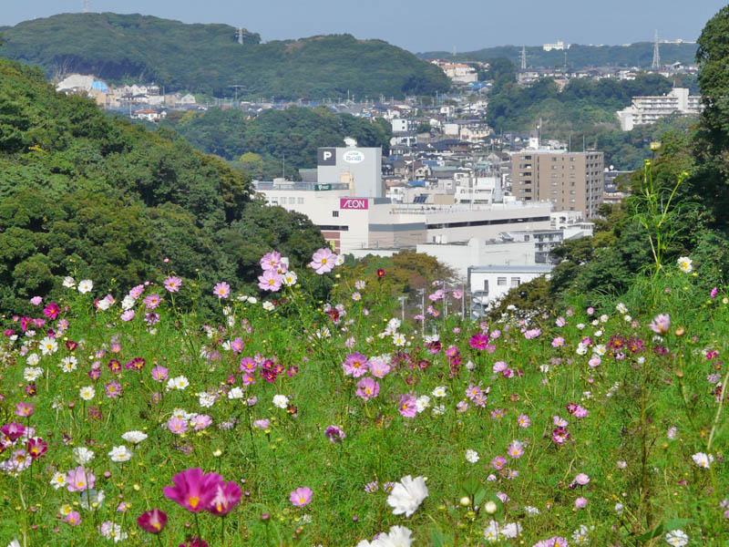 081013花の国2-2